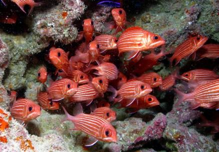 fish-NOAA