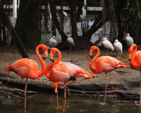 heart-flamingos