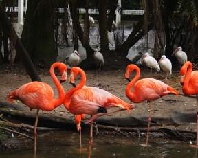 heart-flamingos