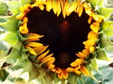 hearts-in-nature-18