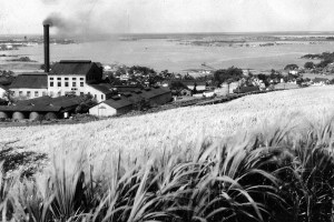 Honolulu Sugar Company