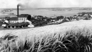 honolulu_plantation_williams_1915