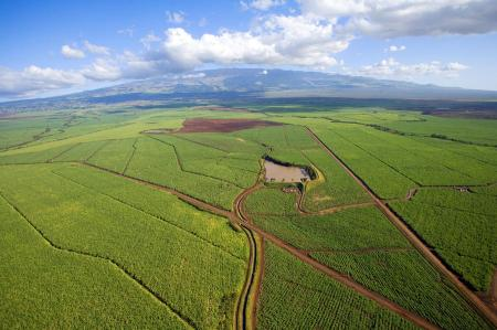 maui-sugar-cane-ron-dahlquist