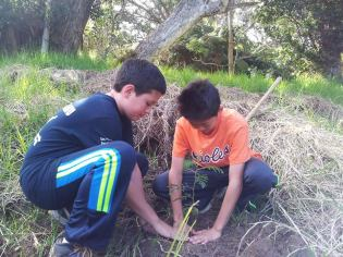 team-work-planting-HFI