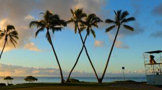 waialae-country-club-palm-tree-w
