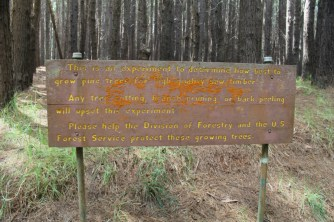 waihou-spring-forestry sign