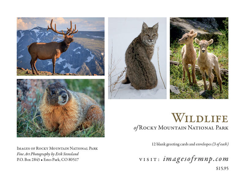 Wildlife Greeting Cards Images Of Rocky Mountain