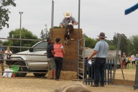 dog high-jump at the Moruya show