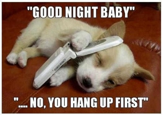 funny good night memes and images