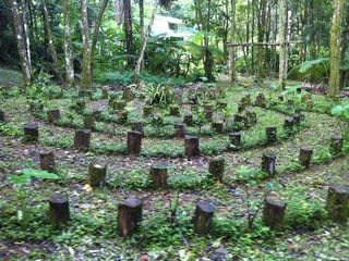 Rain Forest Labyrinth