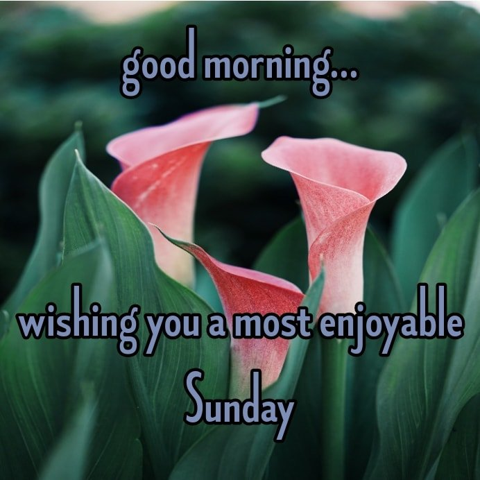 wishing you a most enjoyable Sunday