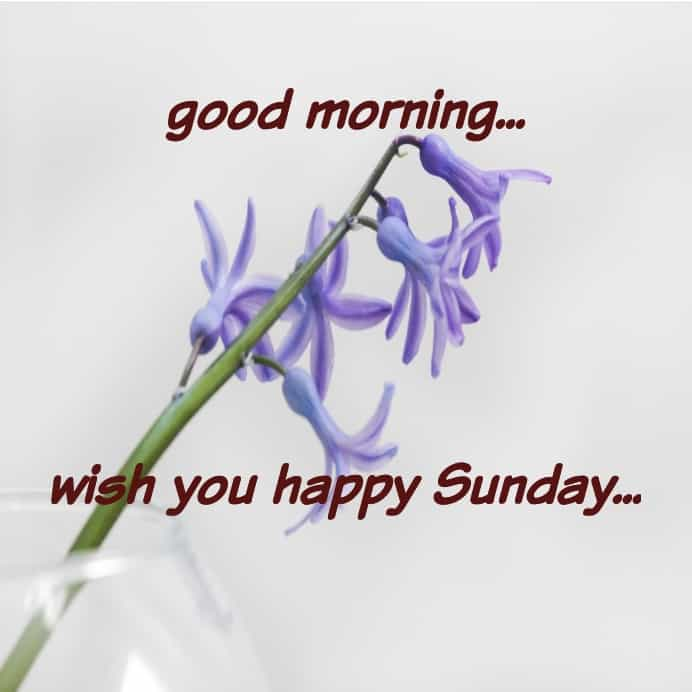 wish you happy Sunday