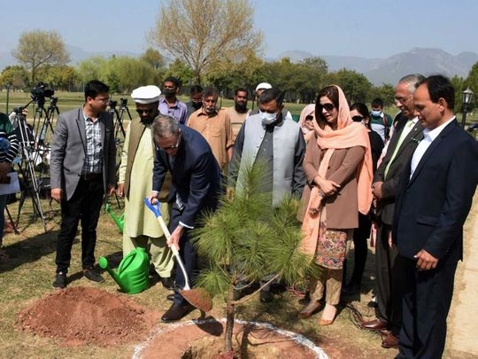 More than 3,000 forests have been. Australia Gifts Miyawaki Forest To Pakistan To Fight Climate Change Pakistan Gulf News
