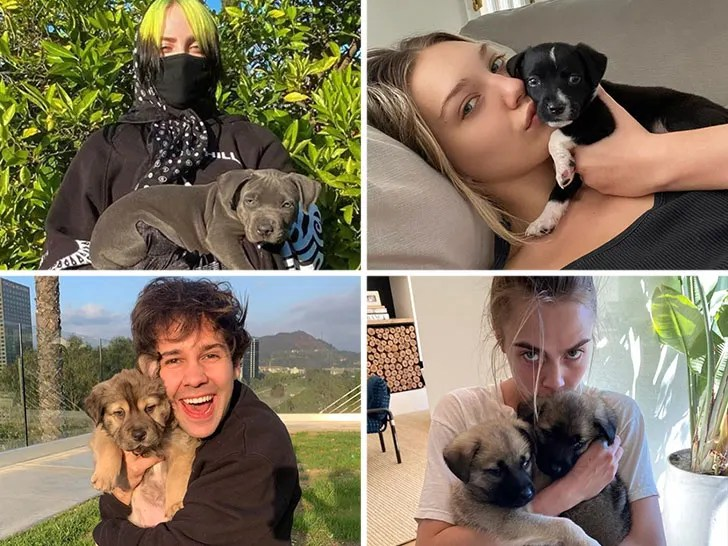 Stars Isolating With Their Pets -- Cute Company!