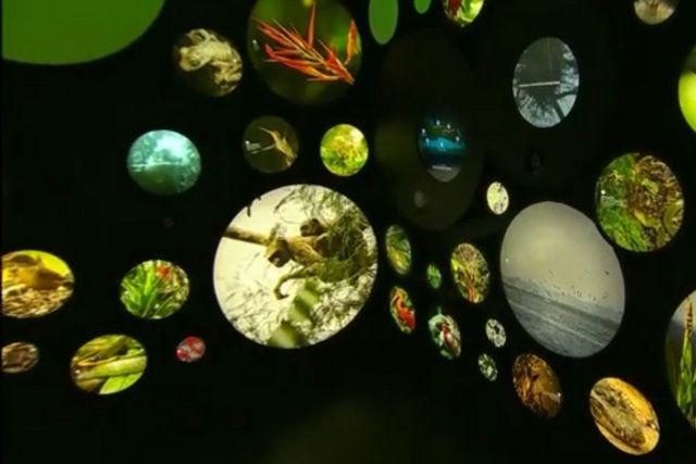 Un recorrido por las especies que forman parte del planeta museo del mañana rio de janeiro