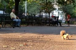 East Village -Tompkins Square Park #03