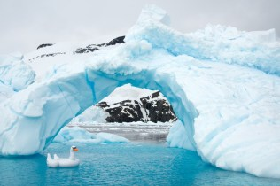 Swan_Ice_Arch_5
