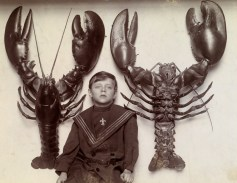 A boy between two mounted lobsters caught off the New Jersey coast, February 1915.