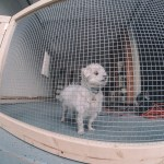 My Man Cave Part 1 Diy Dog Fence For Garage Doors Imaginary Zebra