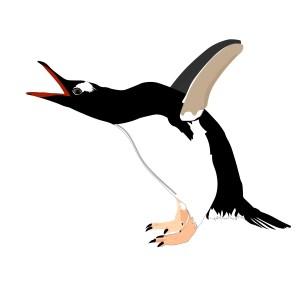 Rock-Pool-Star-Penguin-Barry-Brunswick-Blog