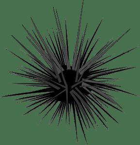 Rock-Pool-Sea-Urchin1-Barry-Brunswick-Blog