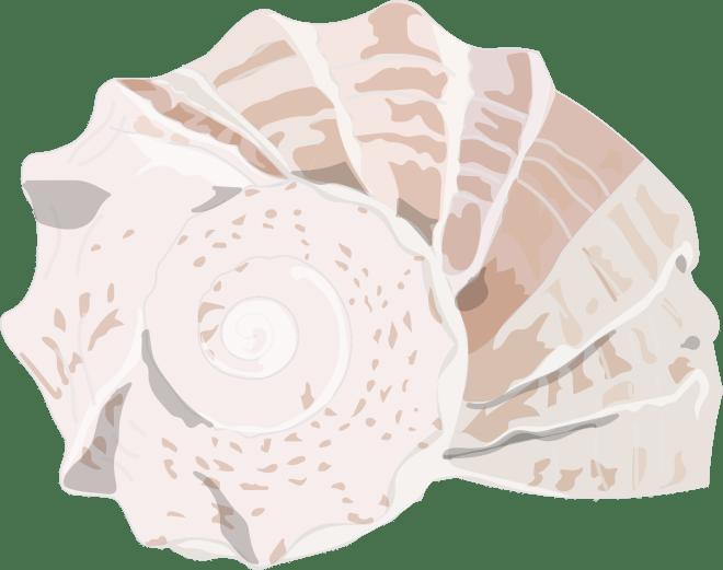 Rock-Pool-Snail-Shell-Barry-Brunswick-Blog
