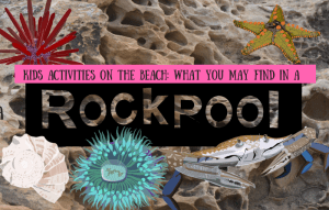 What-you-may-find-Rock-Pool-Barry-Brunswick-Blog