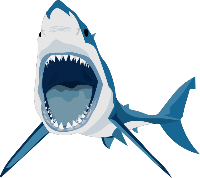Barry-Brunswick-Fun-Facts-About-Sharks-Great White-Shark