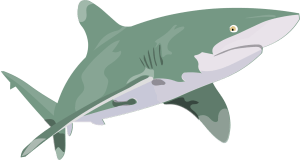 Barry-Brunswick-Fun-Facts-About-Sharks-Oceanic-White-Tip