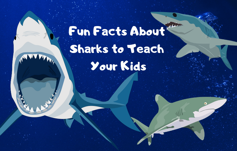 Fun Facts About Sharks to Teach Your Kids