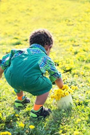 little-boy-in-dandelions-756434_1920