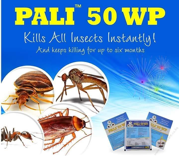 pali-50wp-11