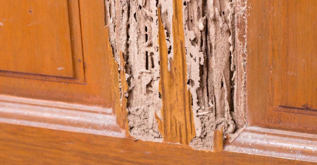 termite-control-pesticides-in-Kenya-1