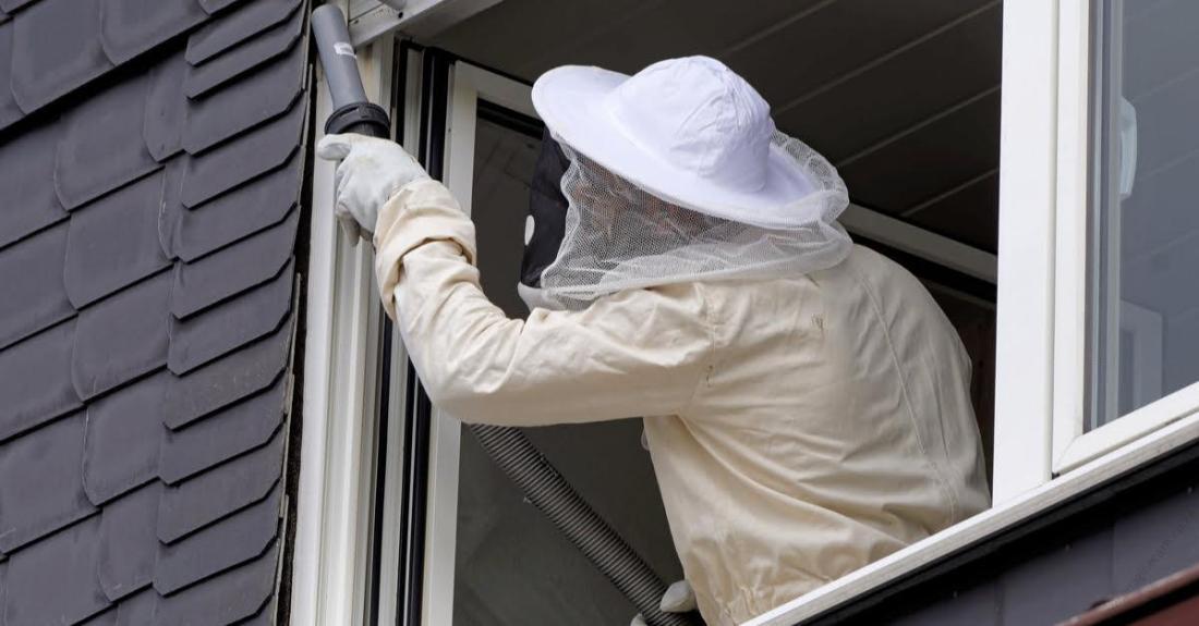 wasps-hornet-nest