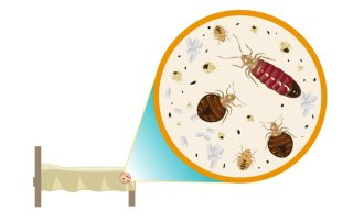 Bed Bugs: Fact Vs. Myth