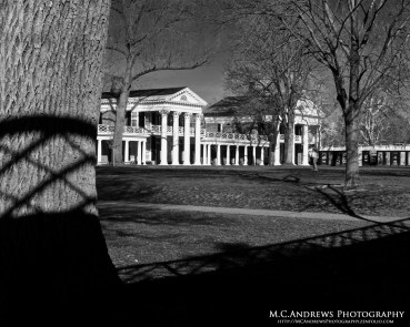 Shadows of the Lawn -BW