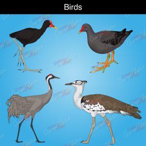 birds-2-scaled