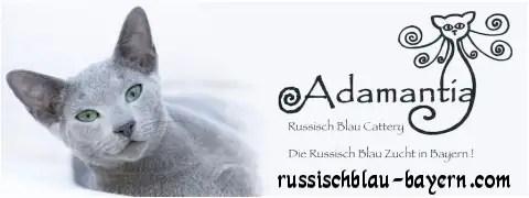 Russisch Blau Katzenzucht Adamantia