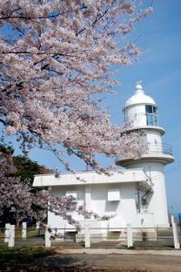 余部埼灯台の桜