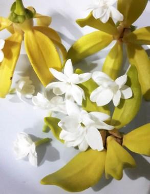 jasmine sambac and karawek