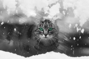 冬に雪が降る理由 (2)
