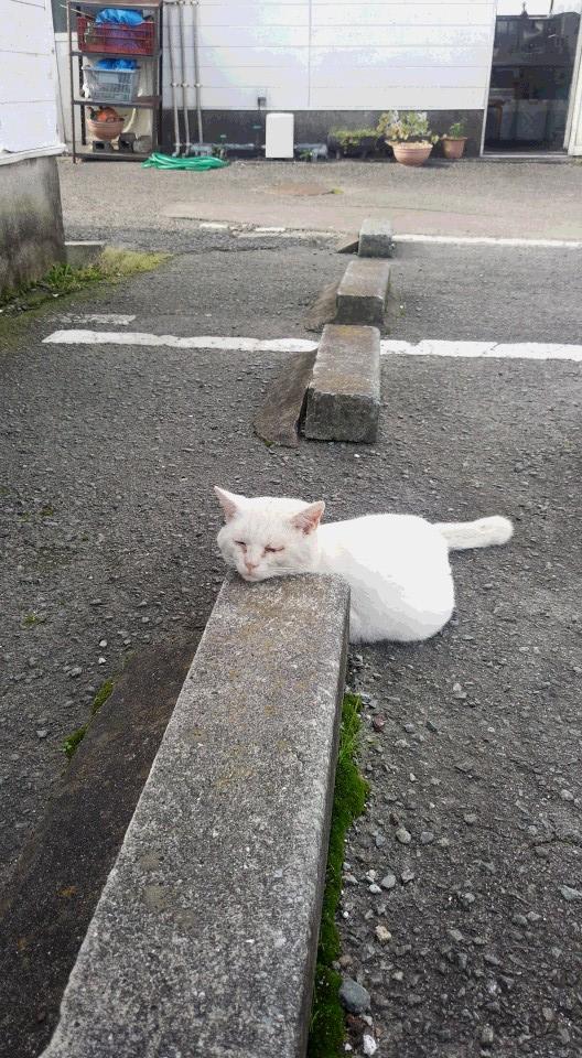 ネコ 駐車場