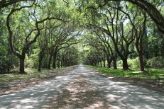 alex-miranda-actually-alessandro-wormsloe-georgia-historic-site-start