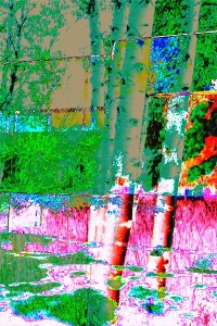 digital artwork aspens abstract