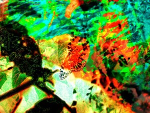 Butterfly-Abstraction