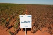 Dia-de-Campo-2012-Sorriso-MT-1487