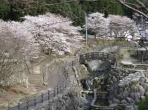 大川内山桜1