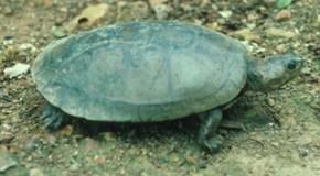 Consultorio: Tortugas