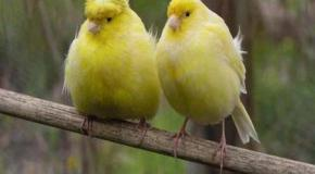 Época de muda en los pájaros