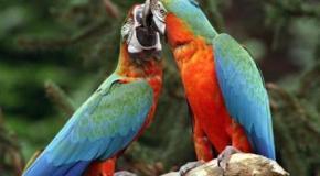 Comida cuando hay dos pájaros